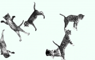 cat-bounce.png